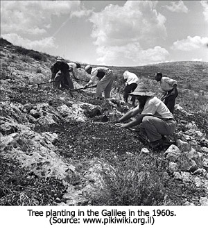 Tree Planting 1960