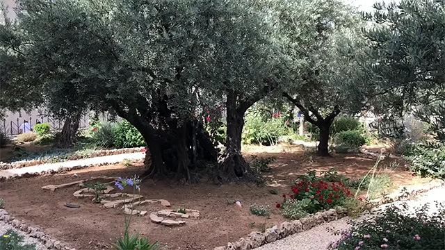 Battle for Israel Day 6, Garden of Gethsemane